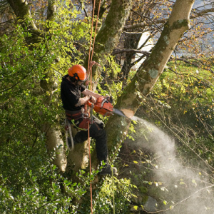Employee cutting down a small tree with a chainsaw in Schaumburg, IL