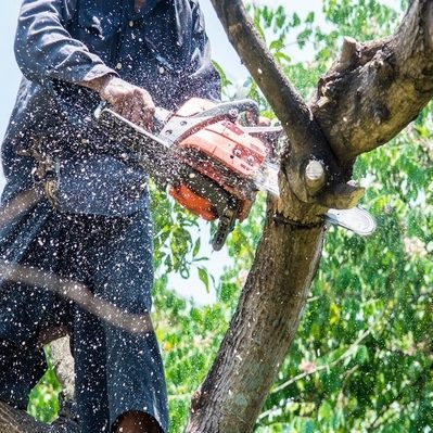 Our tree climber cutting down an old branch of a tree for our customer in Schaumburg, IL